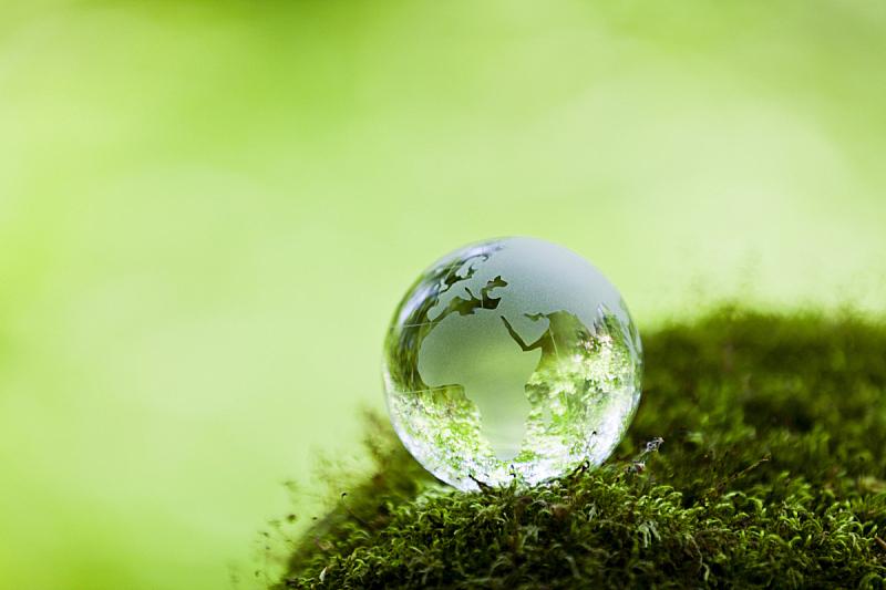 苔藓,森林,岩石,泥土,环境保护,生态旅游,透过其它物体观看,行星,枝繁叶茂,地球