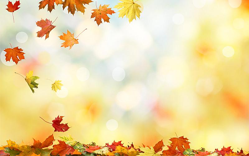 叶子,自然,枫叶,秋天,背景,多色的,公园,边框,水平画幅,无人
