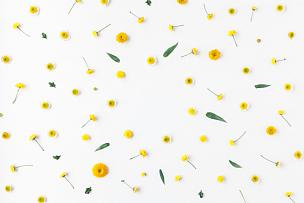 黄色,白色背景,边框,多样,甘菊,雏菊,花蕾,爱沙尼亚,背景分离,叶子