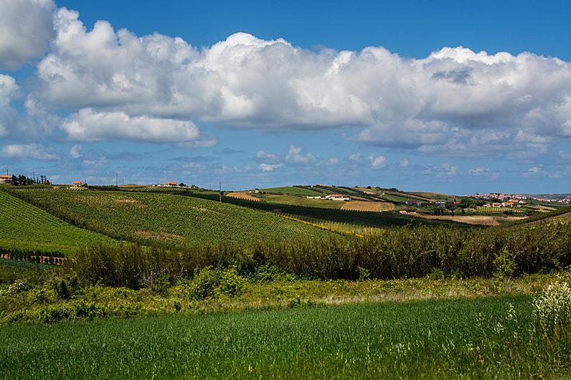 葡萄牙,田地,农业,自然,葡萄酒,天空,水平画幅,地形,欧洲,户外