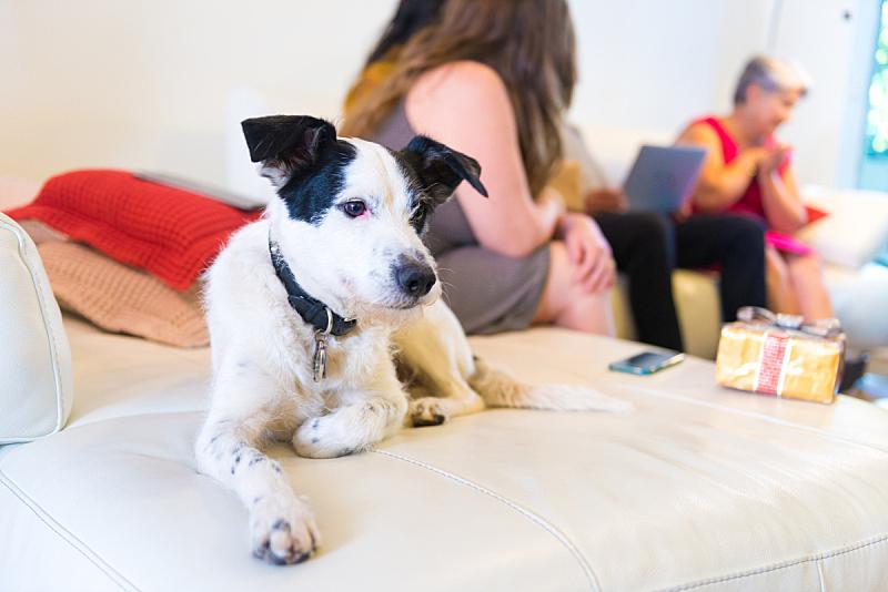 狗,时间,爪子,动物身体部位,沙发,哺乳纲,十二月,技术,巴西