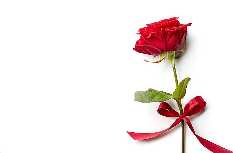 白色背景,缎带,红色,分离着色,玫瑰,美,贺卡,水平画幅,高视角,情人节