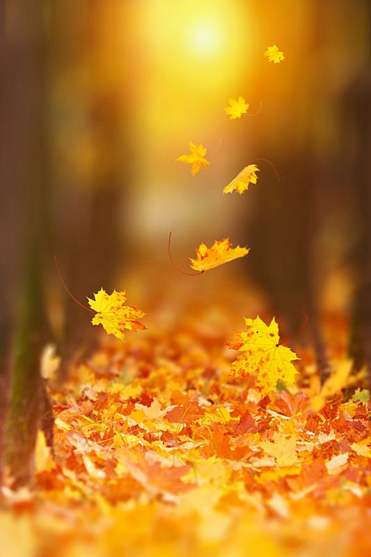 秋天,叶子,垂直画幅,留白,风,早晨,干的,光,风景,抽象背景