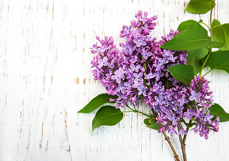 丁香花,自然,水平画幅,绿色,无人,色彩鲜艳,五月,木制,自然美,花束
