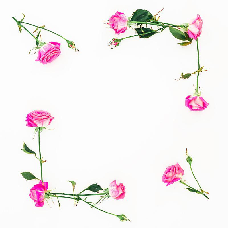 边框,情人节,白色背景,粉色,枝,平铺,叶子,玫瑰,花,构图