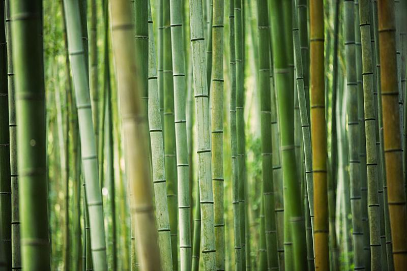 竹林,竹子,笋,丰,枝繁叶茂,竹子叶,禅宗,热带雨林,环境保护,背景