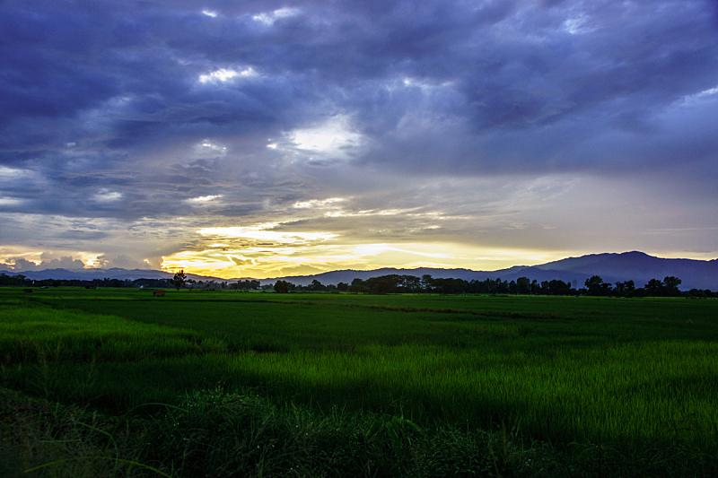 地形,稻,田地,自然,水平画幅,山,亚洲,蓝色,农业,叶子