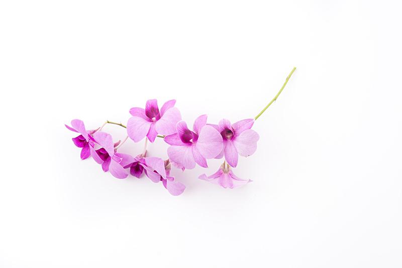 兰花,分离着色,白色,自然,水平画幅,秧苗,无人,符号,抽象,背景分离