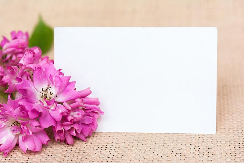 贺卡,国际妇女节,留白,水平画幅,无人,玫瑰,生日,特写,花蕾,白色
