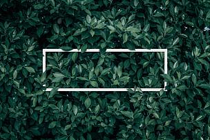 空白的,贺卡,市场营销,请柬,叶子,绿色,枝繁叶茂,热带气候,抽象,纸