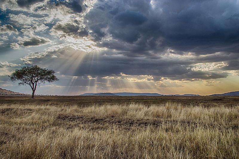塞伦盖蒂国家公园,金合欢树,水平画幅,地形,无人,萨凡纳港市,南美大草原,非洲,坦桑尼亚,户外