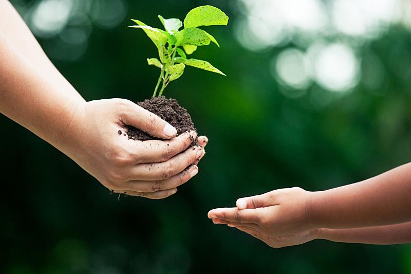 手,儿童,母亲,羊毛帽,可持续生活方式,树苗,可持续资源,生物学,堆肥,肥料