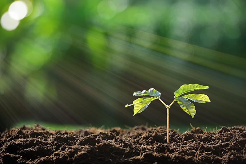 植物,青年人,新的,水平画幅,无人,泥土,户外,花蕾,阳光光束,新生活