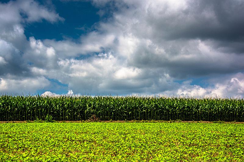 马里兰,巴尔的摩,自然,水平画幅,山,无人,蓝色,户外,大豆,农场