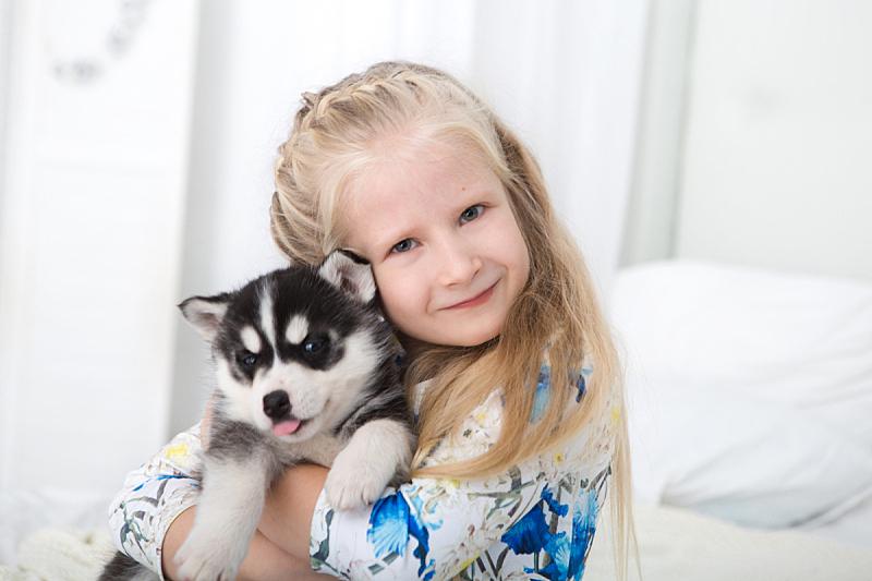 雪橇犬,幸福,小狗,女孩,毯子,美,圣诞帽,新的,休闲活动,水平画幅