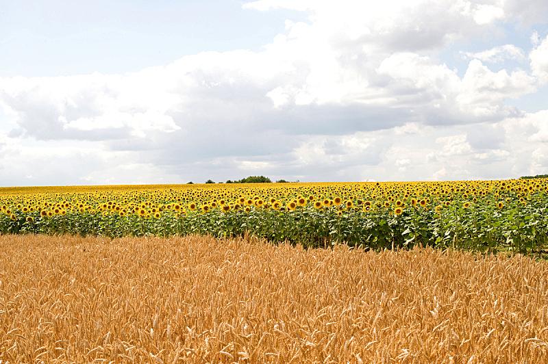 勃艮第,夏天,法国,自然,干草,非都市风光,水平画幅,地形,景观设计,无人