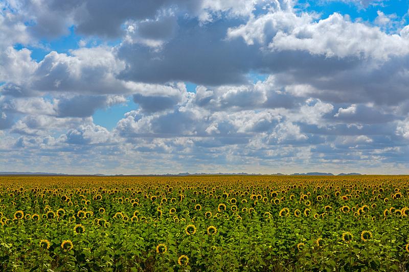 向日葵,看,伦敦眼,接力赛,逃避现实,油漆罐,天空,美,水平画幅,云