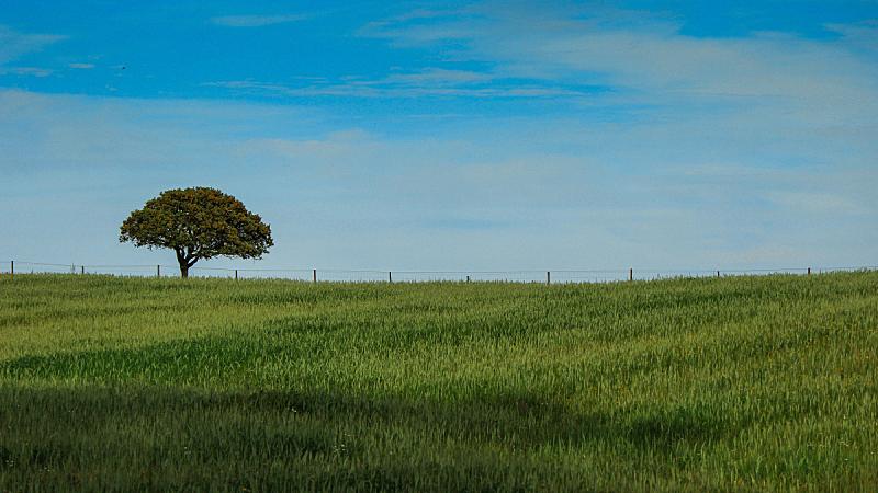 阿连特茹,葡萄牙,田地,cork tree,天空,美,水平画幅,无人,夏天,户外