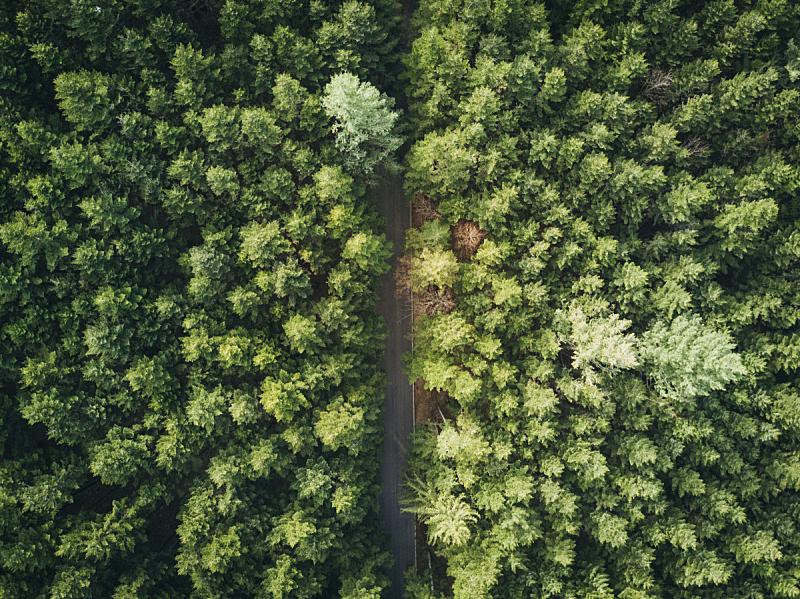 森林,无人机,看风景,路,松木,松树,航拍视角,土路,山,风景