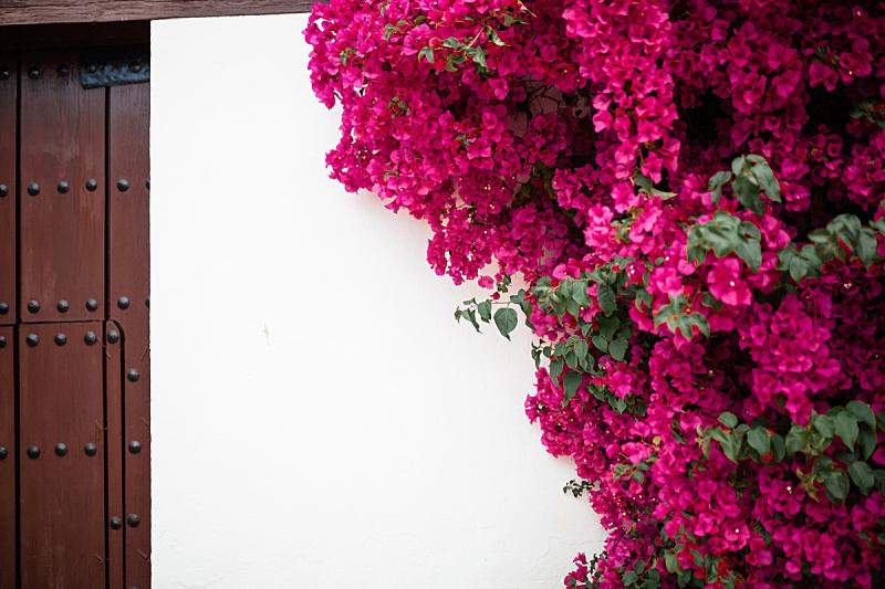 安达卢西亚,三角梅,庭院,西班牙,大量人群,植物学,巨大的,科尔多瓦,传统,花盆