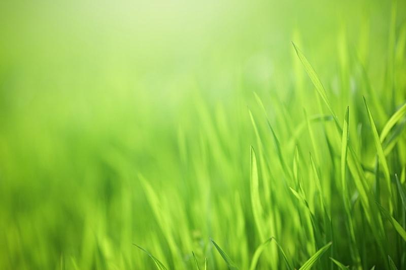 绿色,自然,草,环境保护,枝繁叶茂,草坪,庭院,草地,草皮,园艺