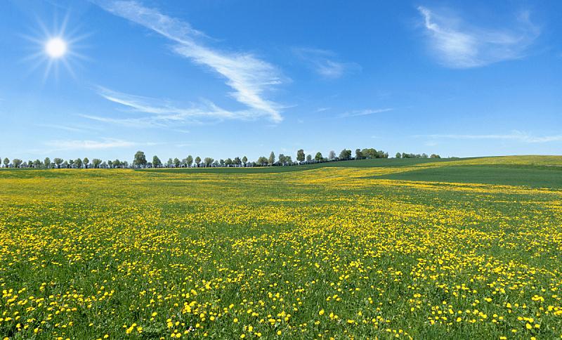 蒲公英,草地,日光,巨大的,云,草,春天,植物,户外,天空
