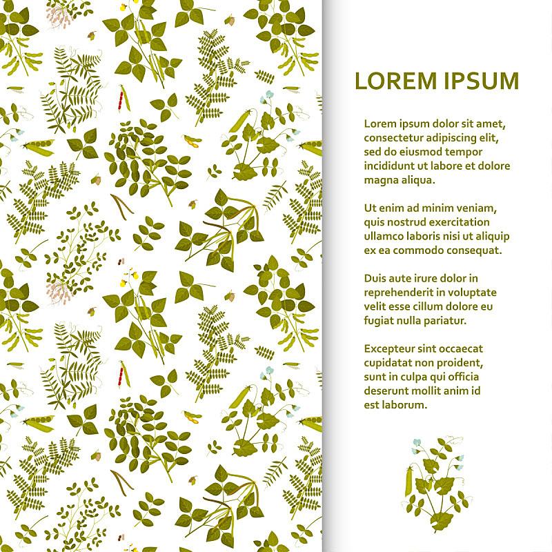 模板,豆科植物,平坦的,植物群,正面视角,贺卡,奶制品,笔记本电脑