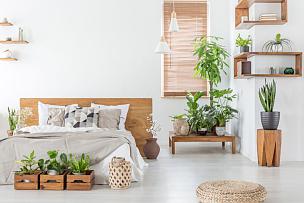 明亮,卧室,床,木制,床头板,室内,枕头,植物群,灯笼,水平画幅
