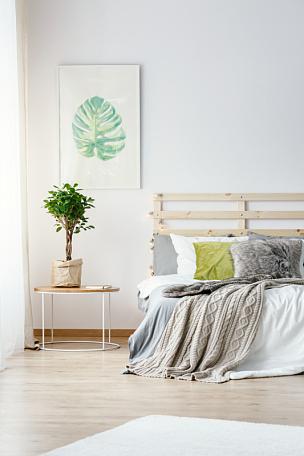 明亮,植物,毯子,卧室,床,桌子,室内,房地产经纪人,摄影