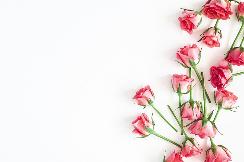 玫瑰,在上面,白色背景,看风景,平铺,留白,请柬,贺卡,背景分离,边框