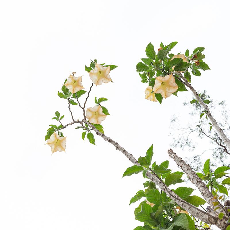 仅一朵花,铃,灵性,自然,无人,符号,上下颠倒,夏天,特写,明亮