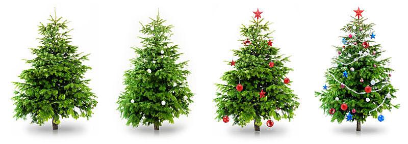 圣诞树,松树,背景分离,白色背景,圣诞装饰,枝,圣诞装饰物,雪,新年,红色
