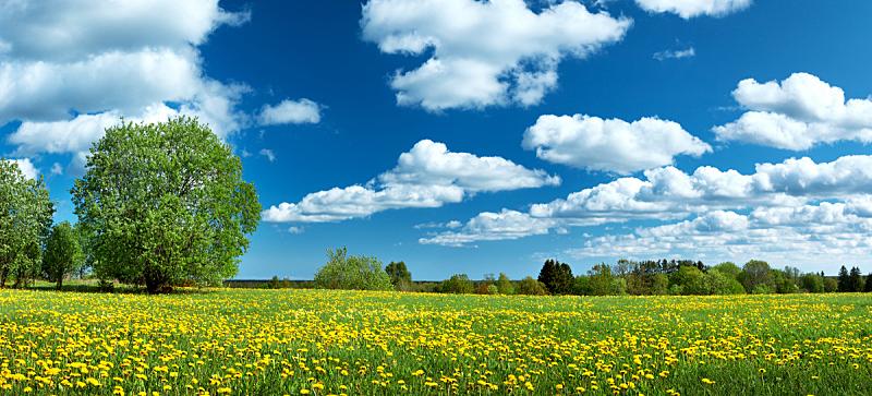 蒲公英,天空,田地,蓝色,周末活动,云景,环境,云,仅一朵花,公园