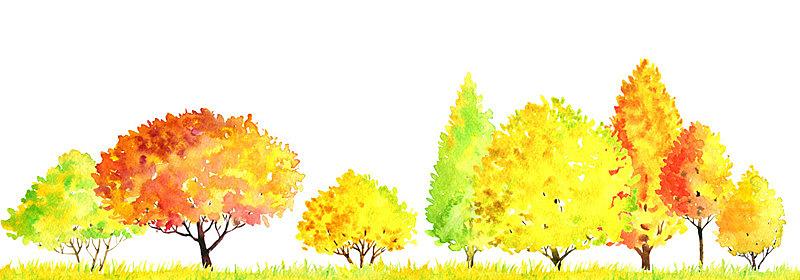 地形,水彩画,秋天,绘画插图,枝繁叶茂,王冠,卡通,草,橡树林地