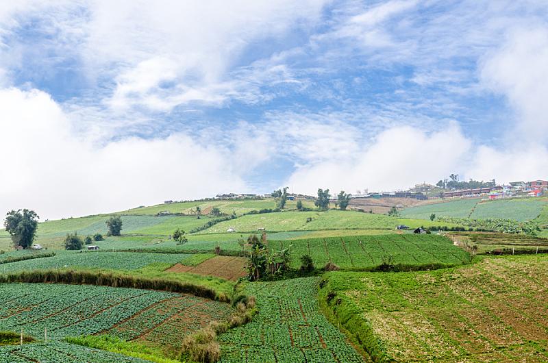 泰国,田地,甘蓝,碧差汶,天空,水平画幅,山,无人,草坪,生长