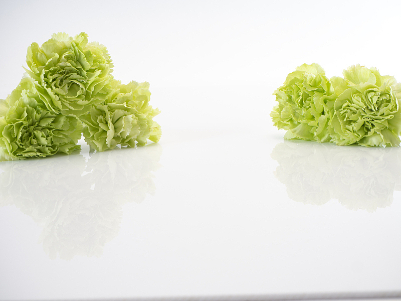 康乃馨,白色,绿色,分离着色,清新,背景分离,浪漫,泰国,春天,植物