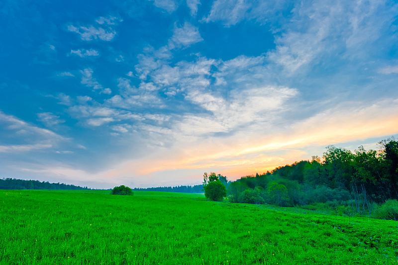 天空,草,明亮,清新,蓝色,绿色,水平画幅,枝繁叶茂,无人,生长