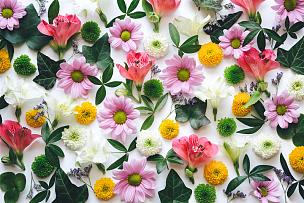背景,水平画幅,高视角,无人,夏天,组物体,特写,明亮,白色,植物