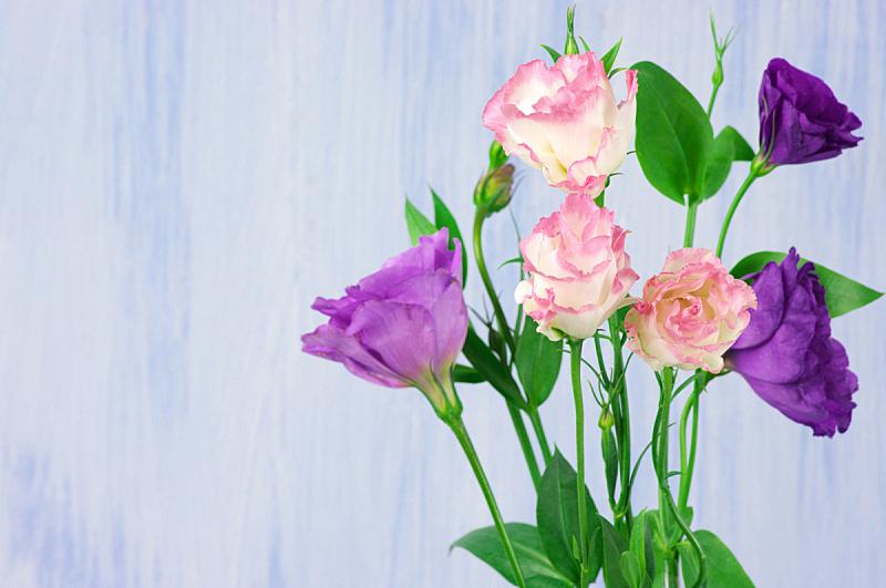 lisianthus,留白,水平画幅,无人,乡村风格,特写,开花时间间隔,花束,植物,清新