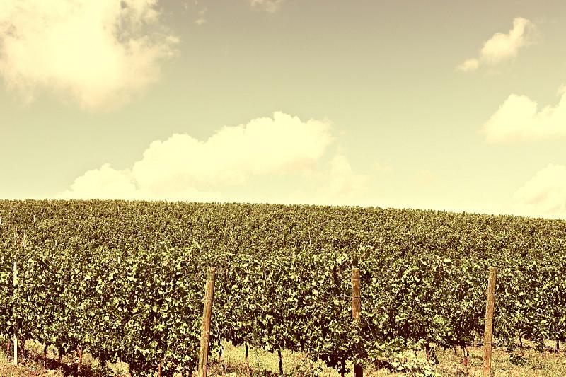葡萄园,奇扬第地区,耕地,天空,水平画幅,山,古典式,户外,阶调图片,田地
