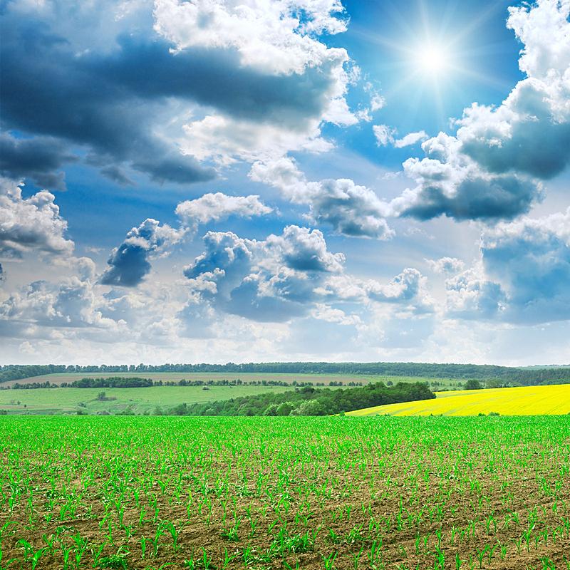 绿色,自然美,天空,无人,早晨,草坪,夏天,户外,草,云景