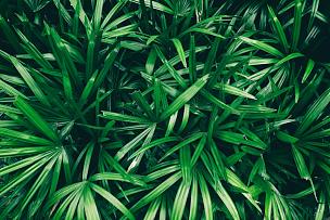 棕榈叶,背景,鸡尾酒,枝繁叶茂,荆棘,夏天,棕榈树,明亮,彩色图片