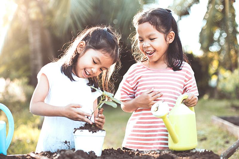儿童,女孩,乐趣,秧苗,亚洲,锅,两个孩子的家庭,树,相伴,种植
