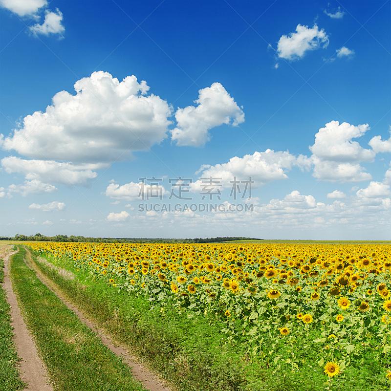 云,向日葵,田地,路,蓝色,天空,农业,文件管理,植物,无人