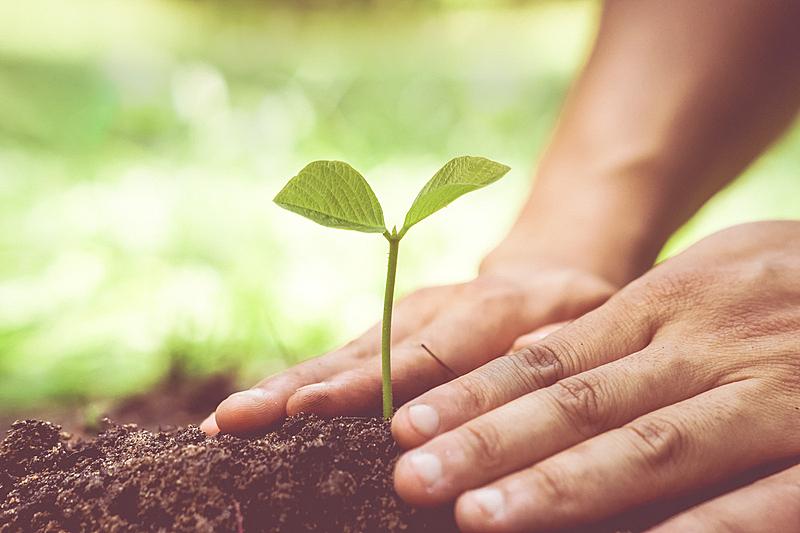 自然,可持续资源,道德,水平画幅,能源,泥土,安全,责任,想法,植物