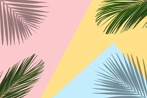 热带气候,背景,明亮,鸡尾酒,多色的,棕榈树,复叶,清新,现代,植物