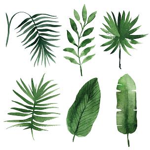 叶子,鸡尾酒,水彩画,自然,艺术,绘画艺术品,绿色,无人,艺术品