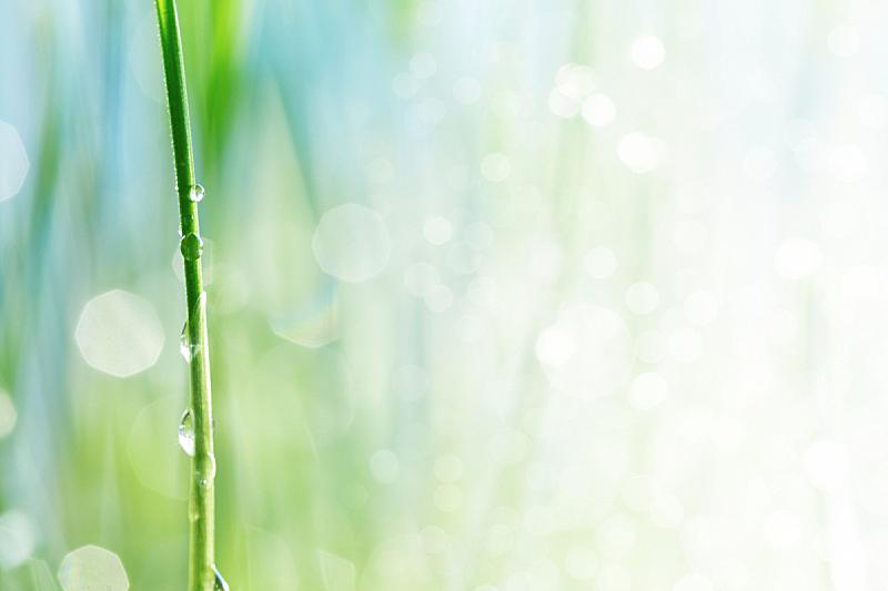 水滴,水,茎,绿色背景,绿色,枝繁叶茂,抽象背景,雨滴,露水,背景虚化