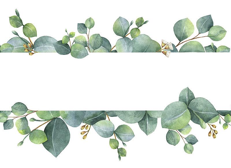 贺卡,绿色,桉树,枝,叶子,白色背景,水彩画,分离着色,发财树,花