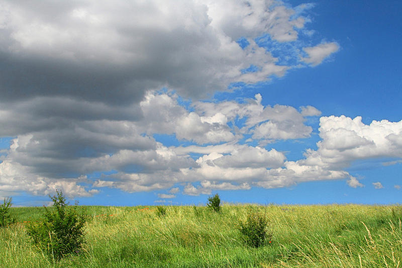 草地,野生植物,春天,天空,暴风雨,草原,水平画幅,无人,夏天,户外